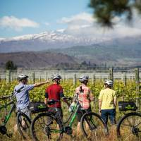 Cycle past vineyards on the Otago Central Rail Trail | Lachlan Gardiner