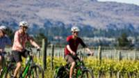 Cycle past vineyards on the Otago Central Rail Trail |  <i>Lachlan Gardiner</i>
